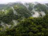 Aerial View of Rainforest with Clouds, Costa Rica Photographic Print by Roy Toft