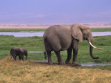 Kenya, Amboseli National Park, Elephant with Offspring Photographic Print by Michele Burgess