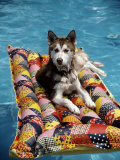 Dog Floating on Raft in Swimming Pool Fotografisk tryk af Chris Minerva