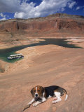 Beagle Dog at Lake Powell, UT Photographic Print by Lonnie Duka