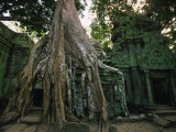 Ta Prohm, 400-year-old Tree, Cambodia Photographic Print by Walter Bibikow