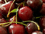 Cherry, Close-up of Red Fruits with Stalks and Covered in Water Drops Photographic Print by Susie Mccaffrey