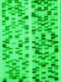 DNA Sequence, a Non- Photosynthetic Algae Photographic Print by David M. Dennis