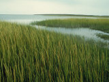 Wetlands in Chincoteague, VA, Photographic Print