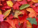 Fall Leaves Photographic Print by Robert Houser