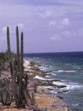 Bonaire, Caribbean Photographic Print by Lauree Feldman