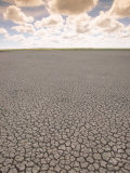Parched Earth, Etosha National Park, Namibia Photographic Print by Walter Bibikow