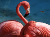 Pink Flamingos Photographic Print by Michele Burgess