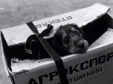 Puppy for Sale at a Flea Market, Moscow, Russia Photographic Print by Walter Bibikow