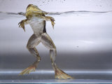Bullfrog, Louisville, CO Photographic Print by Chris Rogers