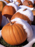Pumpkins in Snow Photographic Print by Jim McGuire