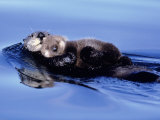 Sea Otter with Offspring Fotografisk tryk af Lynn M. Stone