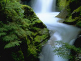 Christine Falls, Mt. Rainier National Park, WA Photographic Print by Brian Maslyar