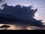 Rain squall and acacia tree, Kenya Art Print
