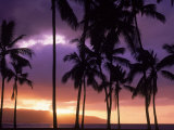 Silhouette of Palm Trees, Hawaii Photographic Print by Mitch Diamond