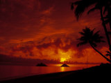 Silhouette of Palm Trees at Sunset, Oahu, HI Photographic Print by Cheyenne Rouse