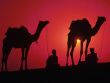 Silhouette of Men and Camels, India Lámina fotográfica por Michele Burgess