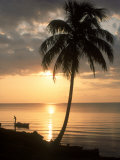 Sunrise with Man in Boat and Palm Tree, Belize Fotografisk tryk af Frank Staub