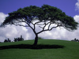 Shade Tree on Grassy Hill Fotografie-Druck von Chris Rogers