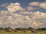 Herd of Elephants, Etosha National Park, Namibia Fotografisk tryk af Walter Bibikow