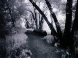 Path Through the Woods, Infrared Photograph Photographic Print by Rick Kooker