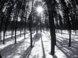 Trees and Shadows, Summit County, CO Photographic Print by Bob Winsett