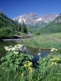 Wildflowers, Maroon Bells, CO Stampa fotografica di David Carriere