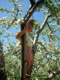 Girl in Tree in Apple Orchard, Glastonbury, CT Photographic Print by Kindra Clineff