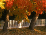 Fall Leaves and White Fence, Nevada City, CA Photographic Print by Frank Pedrick