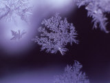 Snowflakes on Window Photographic Print by Lauree Feldman
