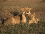 Lioness and Cub, Masai Mara Reserve, Kenya Photographic Print by Michele Burgess