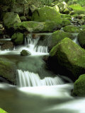 Stream, Great Smoky Mountain National Park, TN Photographic Print by David Davis
