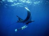 Un plongeur nage avec une raie manta géante, Mexique Papier Photo par Jeffrey Rotman