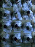 Monks Praying, Cao Dai Temple, Tay Ninh, Vietnam Fotografisk tryk af Shmuel Thaler
