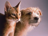 Portrait of a Dog and Cat Photographic Print by Daniel Fort