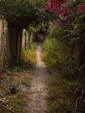 Path to Secluded Beach, Sanibel Island Photographic Print by Frank Simonetti