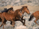Wild Horses Running Through Desert, CA Photographic Print by Inga Spence