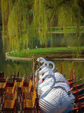 Swan Boats, the Public Garden, Boston, MA Photographic Print by Kindra Clineff