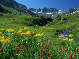 Wildflowers, American Basin Fotodruck von Russell Dohrmann