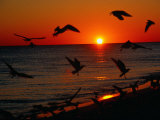Seagulls FLying Over the Beach at Sunset, FL Photographic Print by Ken Glaser