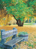 Bench, Autumn Colors Photographic Print by Lynn Eodice