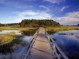 Jeff Greenberg - Uncle Tim's Bridge, Wellfleet, Cape Cod, MA Fotografická reprodukce
