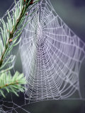 Spider Webs and Dew Drops Fotoprint van Jim Corwin