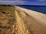 Bluff Above Maguire Landing, Cape Cod, MA Photographic Print by Jeff Greenberg