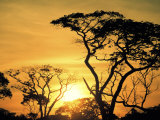 Botswana, Kalahari Desert, Sunset, Photographic Print