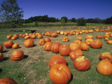 Pumpkin Patch, CA Photographic Print by Mitch Diamond