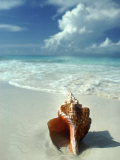 Seashell on Beach Photographic Print by William Swartz