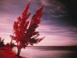 Dry Beach, Araruama, Lake Region Photographic Print by Silvestre Machado