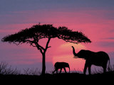 Silhouette of Elephants and Tree Impressão fotográfica por David Davis