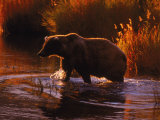 Grizzly Bear, Ursus Arctos Middendorffi, AK Lámina fotográfica por Franz, D. Robert